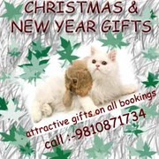 9313005254  Home delivery of pups.